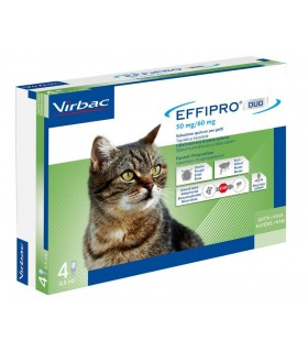 Effipro duo gatto spot-on 50 mg 4 pipette