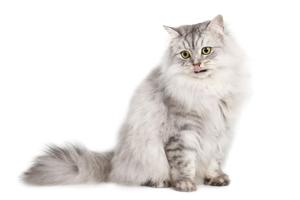 Antiparassitari per Gatto