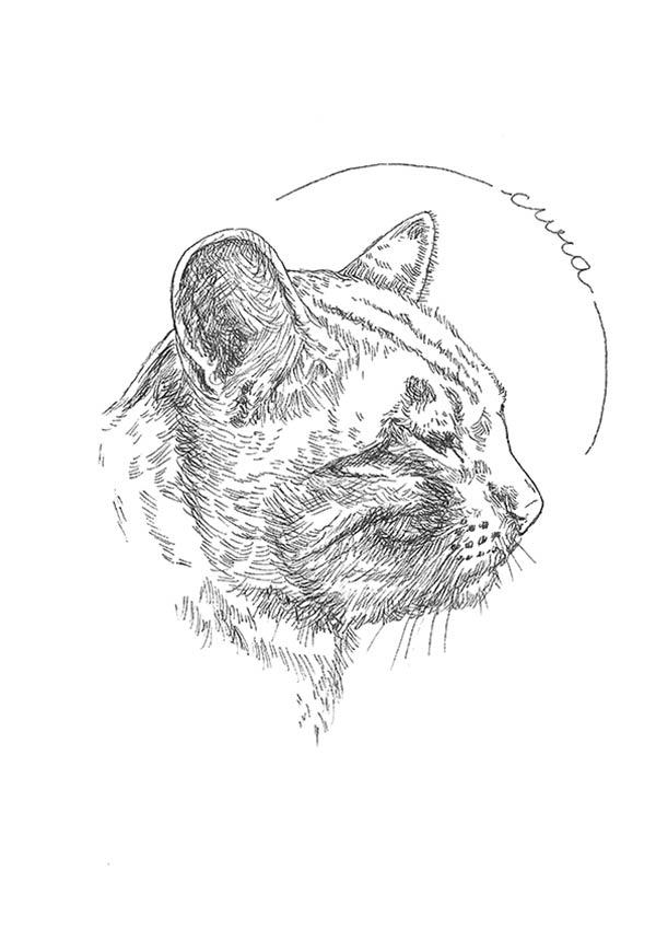 linea antiparassitari per gatti
