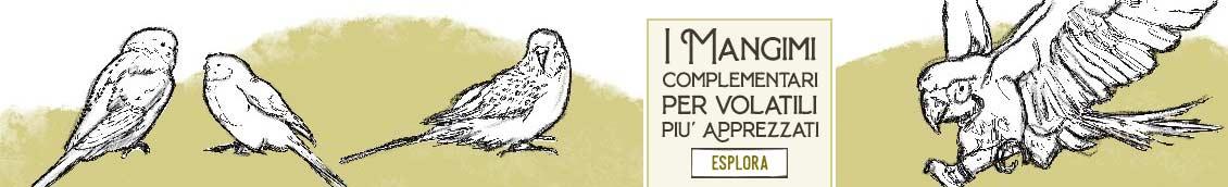 I Migliori Mangimi Complementari per Uccelli