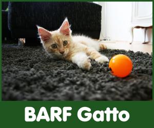 Alimenti per Gatto BARF