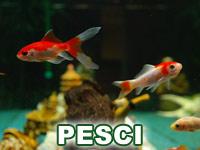 Categoria Pesci